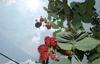 blackberry-20140720_03.jpg